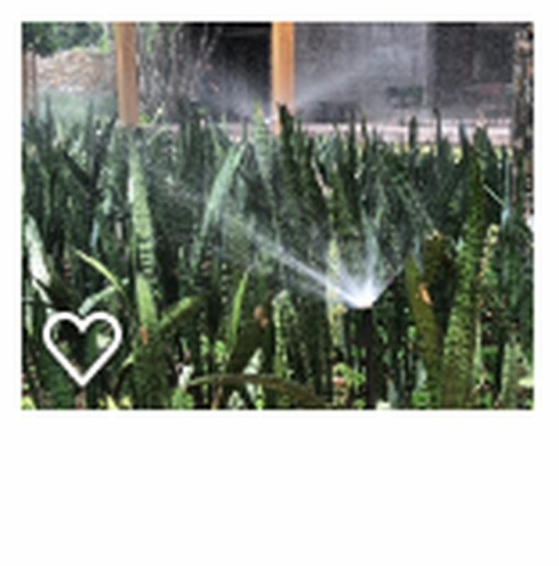 Projetos de Irrigação Agrícola Cesário Lange - Projeto Irrigação Pastagem