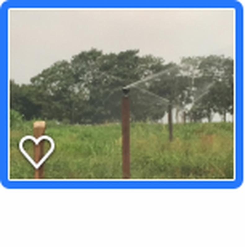 Valor de Projeto Irrigação Pastagem Cotia - Projeto Irrigação Pastagem
